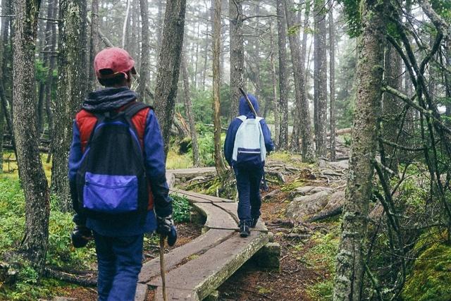 Endless Caravan - Walking down Trail