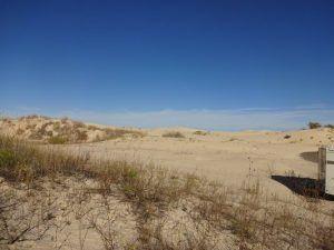 monahans-sandhills-state-park-2