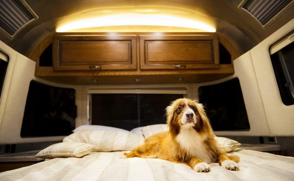 Airstream Classic Dog Bed